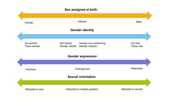 4 double ended arrows stacked vertically. The first arrow is titled Sex Assigned at Birth and has female at the left end, intersex in the middle and male at the right end. The second arrow is titled Gender Identity and has Cis woman and trans woman at the right, non-binary, gender non-conforming, gender variant, gender crativec in the middle and cis man and trans man at the right end. The third arrow is titled Gender Expression and has feminine at the left end, androgynous in the middle and masculine at the right end. The fourth arrow is titled Sexual Orientation and has attracted to men at the left end, attracted to multiple genders in the middle and attracted to women at the right end.