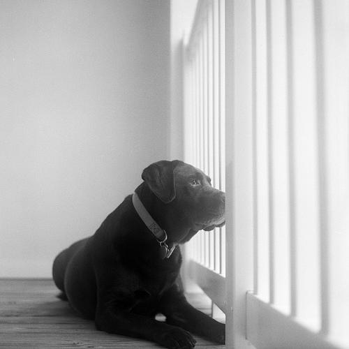 photo of a watchdog